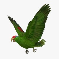 Amazona Viridigenalis 'Red-crowned Amazon Parrot'