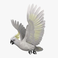 3d model of cacatua galerita sulphur-crested cockatoo