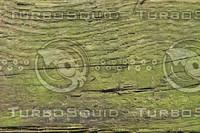 Wood_Texture_0015