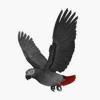 Psittacus Erithacus 'Congo African Grey Parrot'