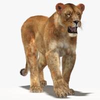 3dsmax lioness fur cat