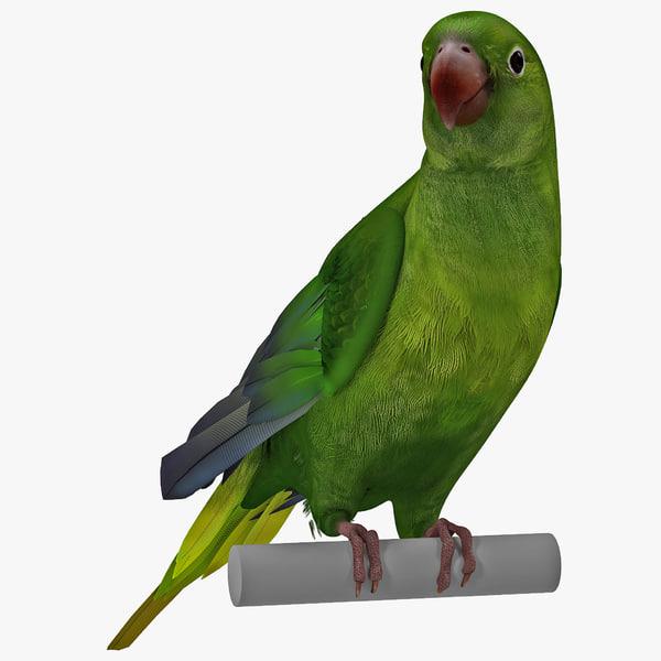 Parakeet Rigged parrot paroquet paraquet keet tropical pet vray zoo realistic