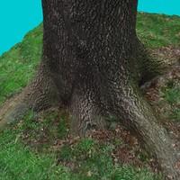 3d model tree trunk 6