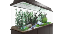 Aquarium Fresh Water Animated
