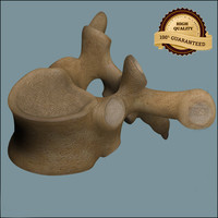 3d 3ds vertebrae anatomy