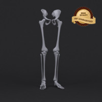 leg skeleton 3d 3ds
