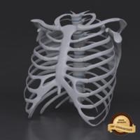 3d rib cage