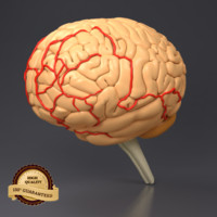 3d brain head model