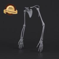hand skeleton 3d model