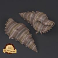 3d model shell