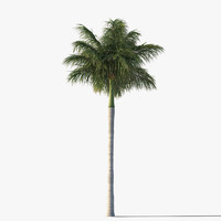 royal palm tree fbx