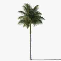 royal palm tree 3d max