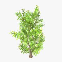 3d plant 08 model