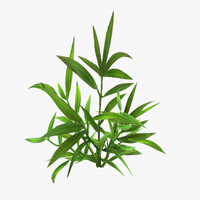 3d model of plant 16