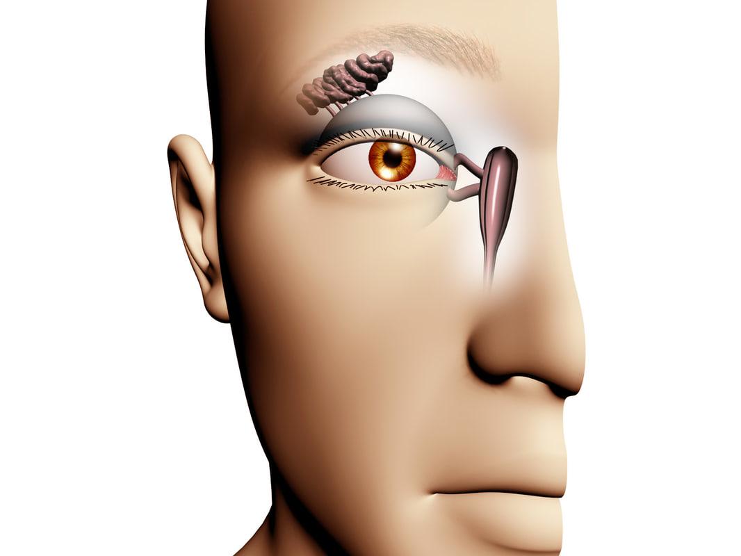Lacrimal Drainage System.jpg