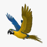 3d ara ararauna blue-and-yellow macaw model