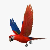 Ara Macao 'Scarlet Macaw Parrot'