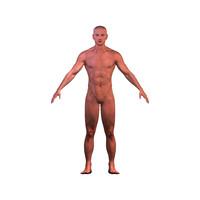 anatomy human male character 3d model