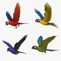 Macaw Parrots Collection