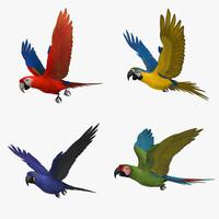 maya macaw parrots