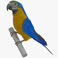 3d blue gold macaw pose
