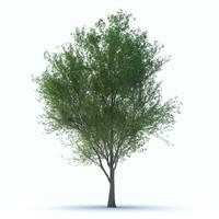 3dsmax tree trunk