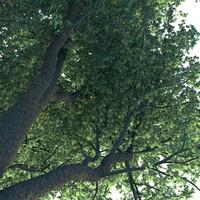 tree trunk fbx