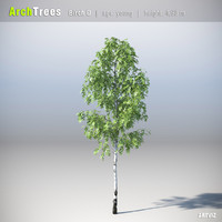 ArchTrees Birch (D)