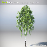 ArchTrees Birch (C)