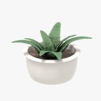 3d aloe fern plant model