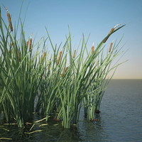 Ornamental Grass 3D models