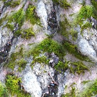 Mossy Rock Collection 1