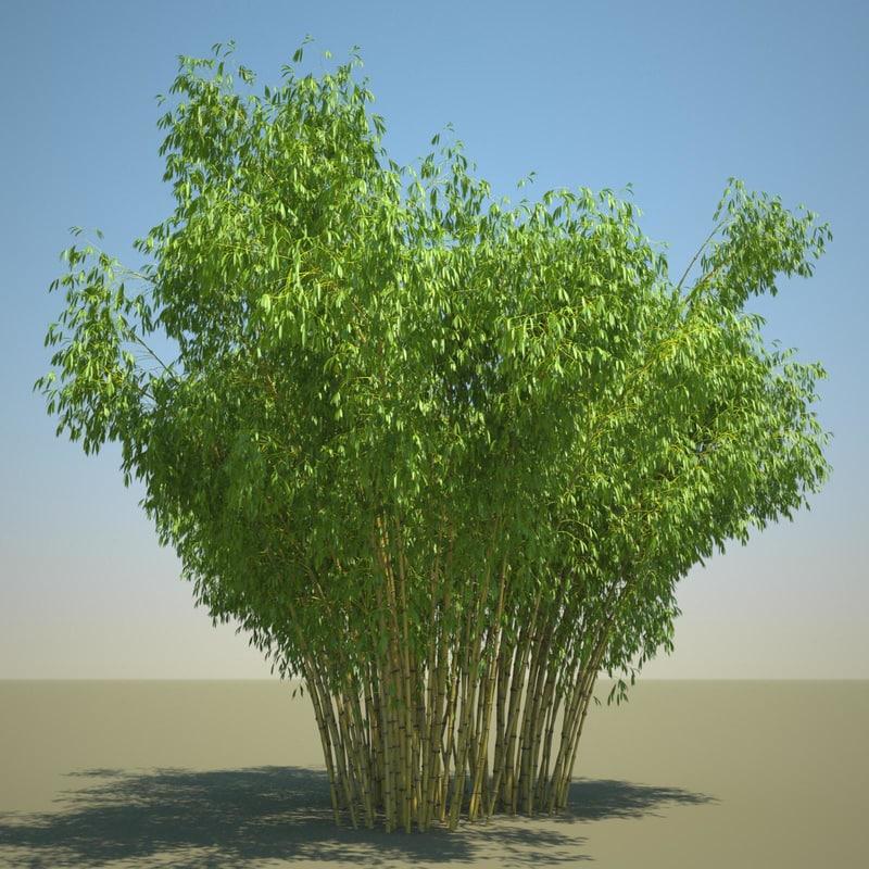 Golden_Bamboo_11_sky_bg.jpg