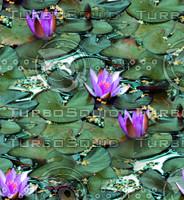 Lilypads 1