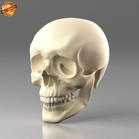 anatomy medical science 3d model
