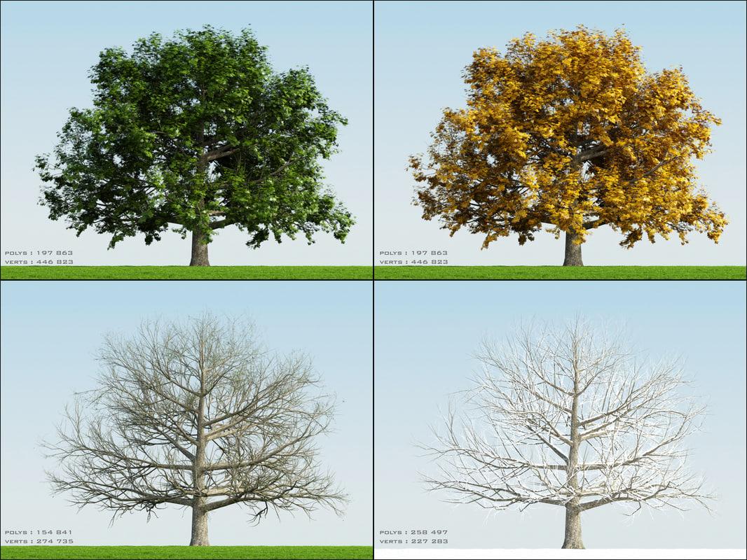 Oak002_PDF.jpg
