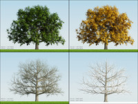 3d model 4 season tree oak002