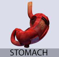 Stomach Leyers textured