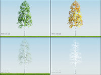 3d 4 season tree birch003 model