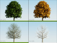 3d model 4 season tree oak001