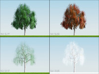 3d model 4 season tree willow001