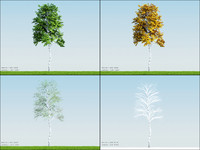 3d model 4 season tree birch001