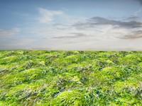 Wet grass 1