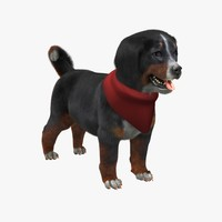 cute zennenhund puppy fur 3d model
