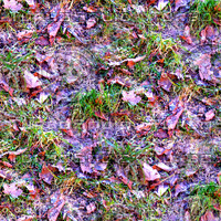 Grass with autumn leaves 11