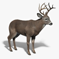 3d model white tailed deer fur