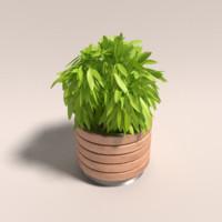 plant designed 3d model