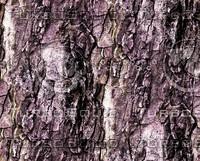 Tree bark 23
