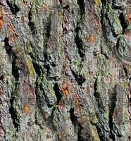 Tree bark 26