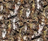 Tree bark 22